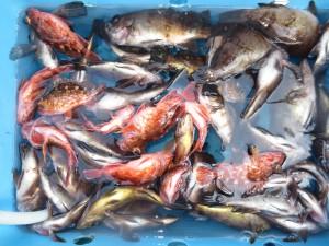 0024 1月30日午前の釣果