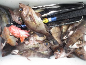 0034 1月30日午前の釣果