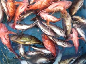 0042 1月14日午前の釣果