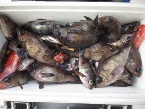 0054 1月30日午前の釣果