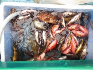 0013 2月9日午前の釣果