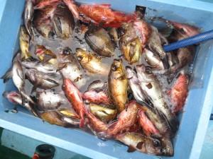 0023 2月9日午前の釣果