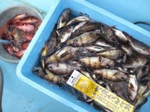 0026 2月24日午前の釣果
