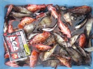 0036 2月24日午前の釣果