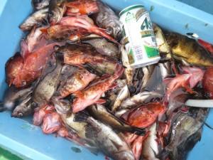 0044 2月24日午前の釣果