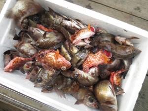 0072 2月24日午前の釣果