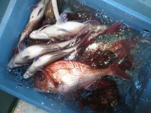 00212 5月27日午後の釣果