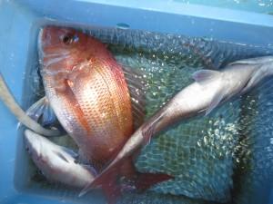 0045 5月13日午後の釣果