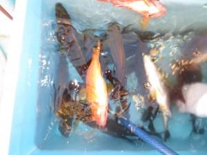 0024 6月17日午後の釣果