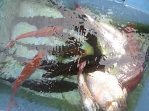 0034 7月20日午前の釣果