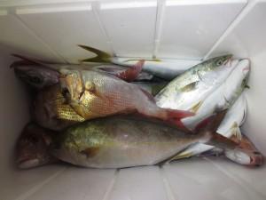 0041 9月19日午後の釣果