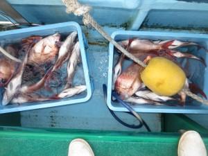 0027 10月28日午後の釣果
