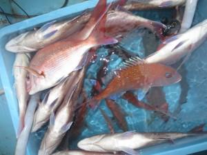 0033 10月23日午後の釣果