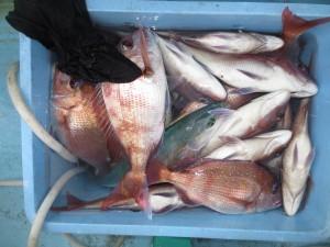 0045 10月28日午後の釣果
