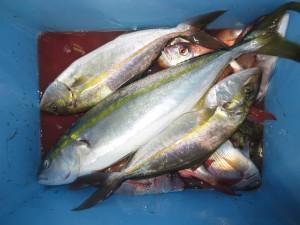 005 10月4日午後の釣果