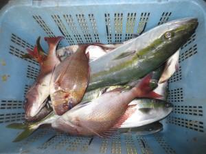 0084 10月31日午後の釣果