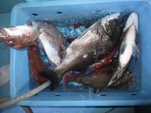 00111 11月16日午後の釣果