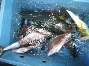 0016 11月8日午後の釣果