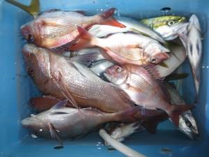 0035 11月7日午後の釣果