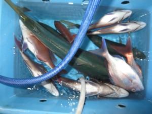 00410 11月17日午後の釣果