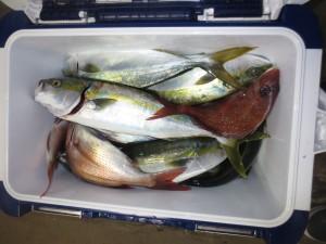 0071 11月2日午後の釣果