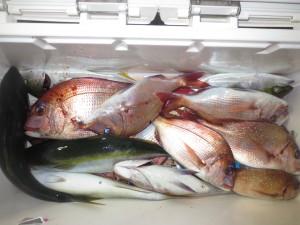 008 11月1日午後の釣果