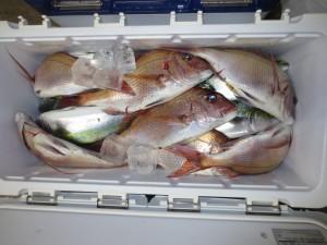 0081 11月2日午後の釣果