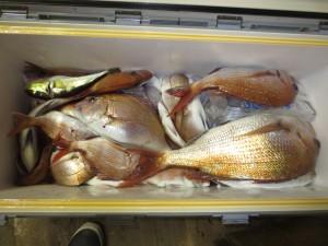 0083 11月8日午後の釣果