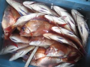 0016 12月20日午後の釣果
