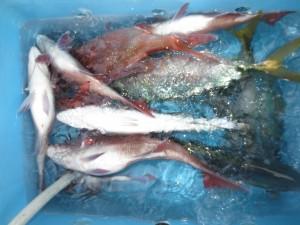 0017 12月21日午後の釣果