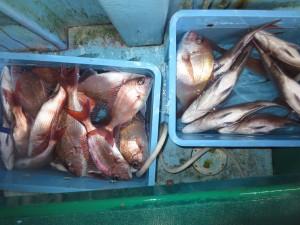 0025 12月17日午後の釣果