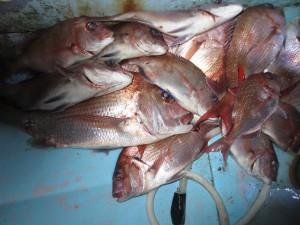 0026 12月20日午後の釣果