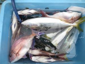 0042 12月6日午後の釣果