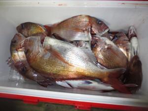 0046 12月20日午後の釣果