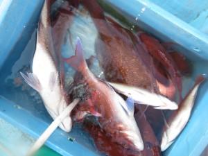 00411 5月29日午後の釣果