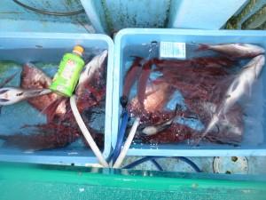 0011 6月2日午後の釣果