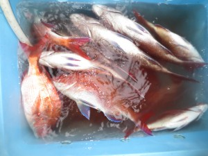 0022 6月3日午後の釣果