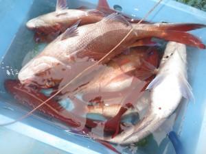 0032 6月3日午後の釣果