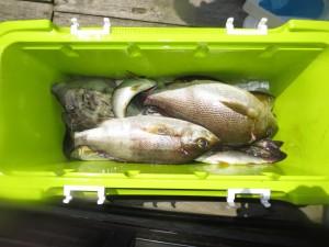0011 7月18日午前の釣果